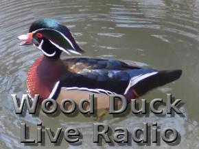 Wood Duck Live Radio