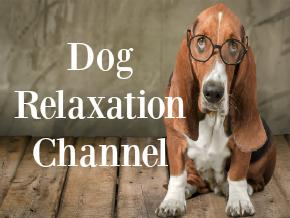 Dog Relaxation Channel