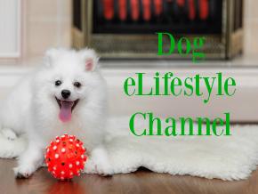 Dog eLifestyle